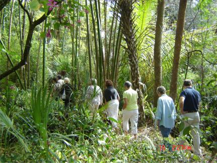 trails-of-bamboo-island